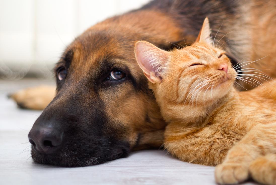 Animais de estimação podem transmitir doenças | Foto: Reprodução