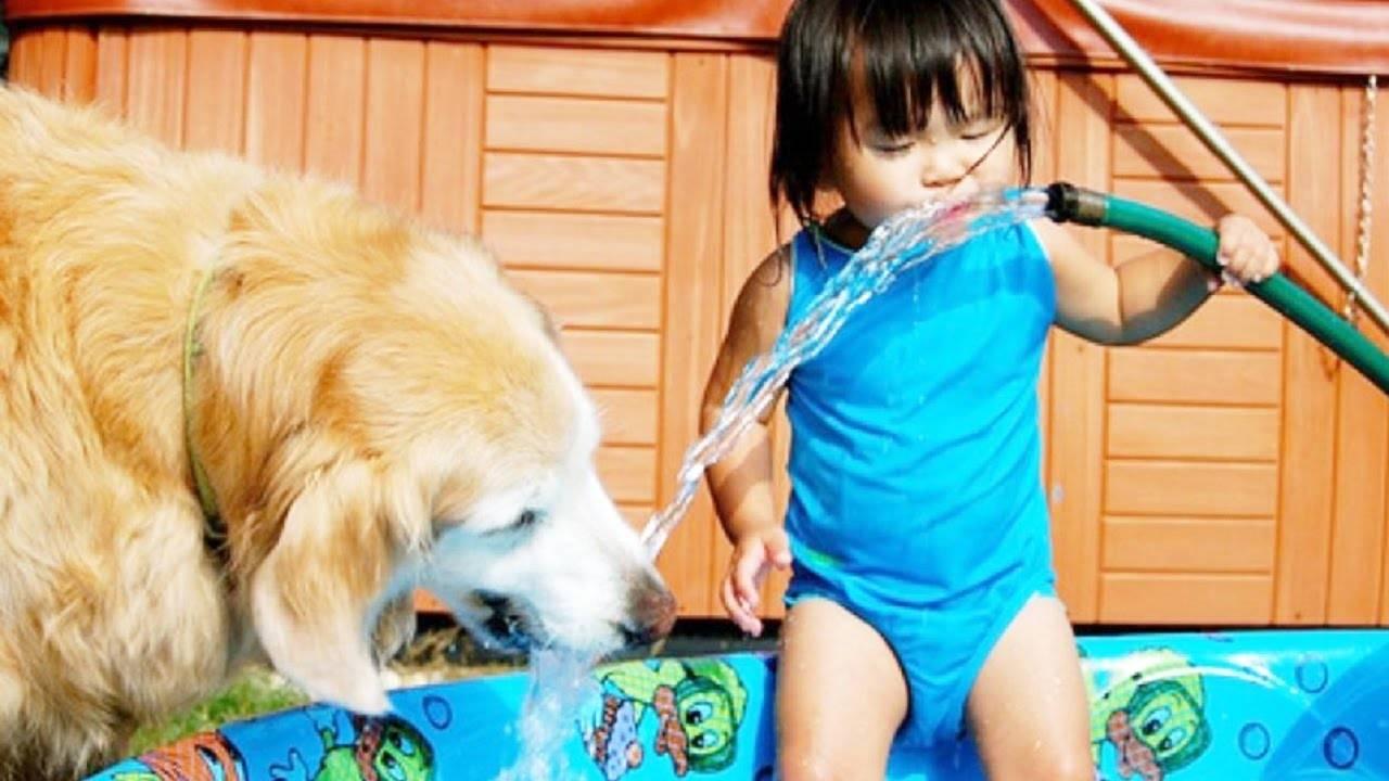 Especialista explica como melhorar o convívio entre pets e crianças | Foto: Reprodução