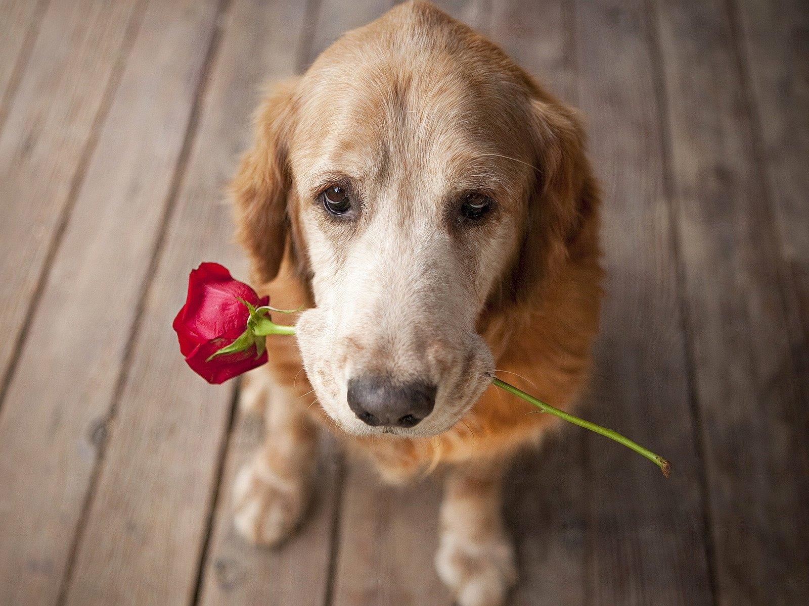 Não é preciso teoria para perceber as demonstrações de amor e carinho que os cães nos dão o tempo todo   Foto: Reprodução