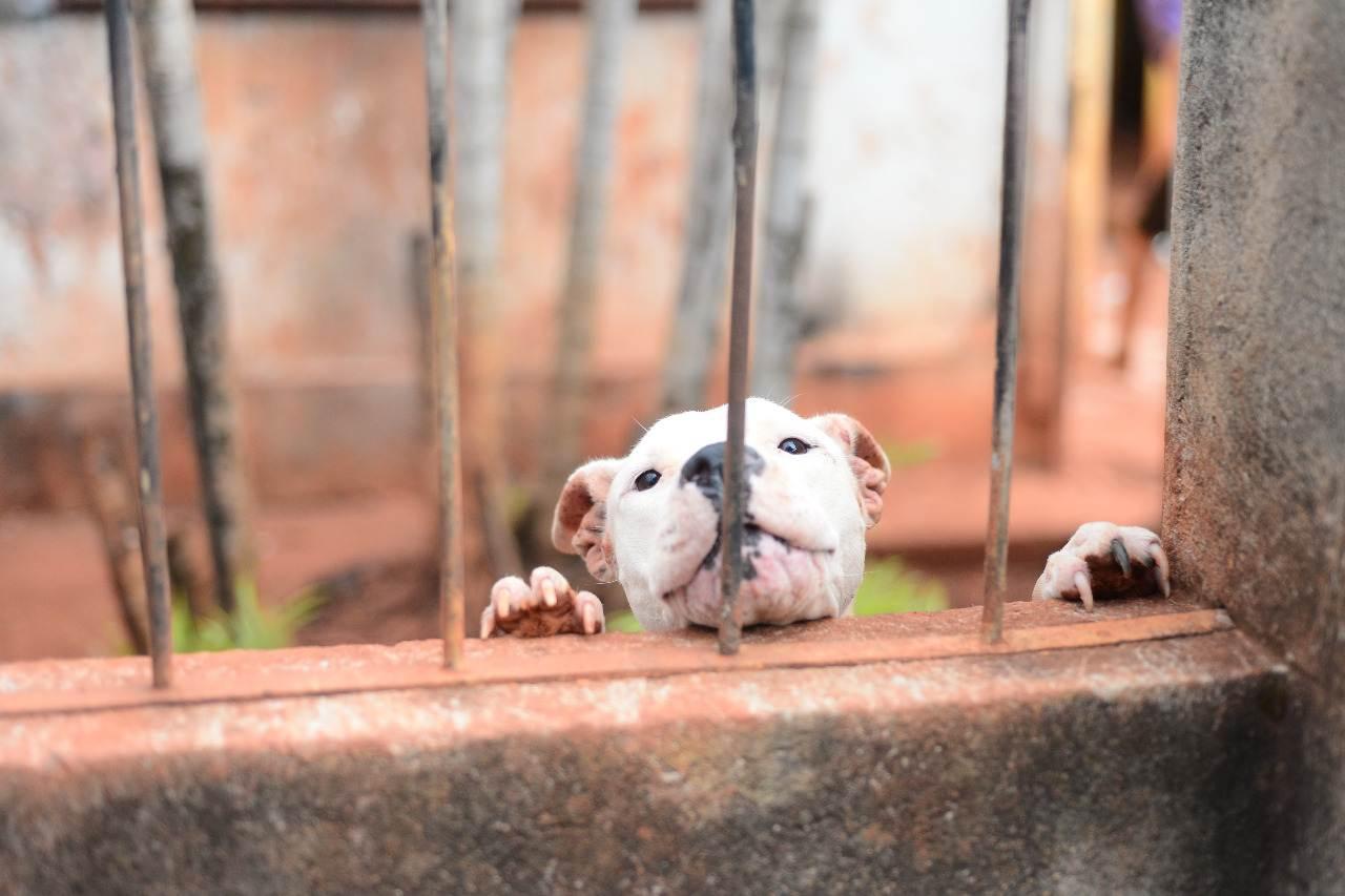 Pitbulls não tinham condições mínimas de alimentação ou higiene no local   Foto: Divulgação / Deam