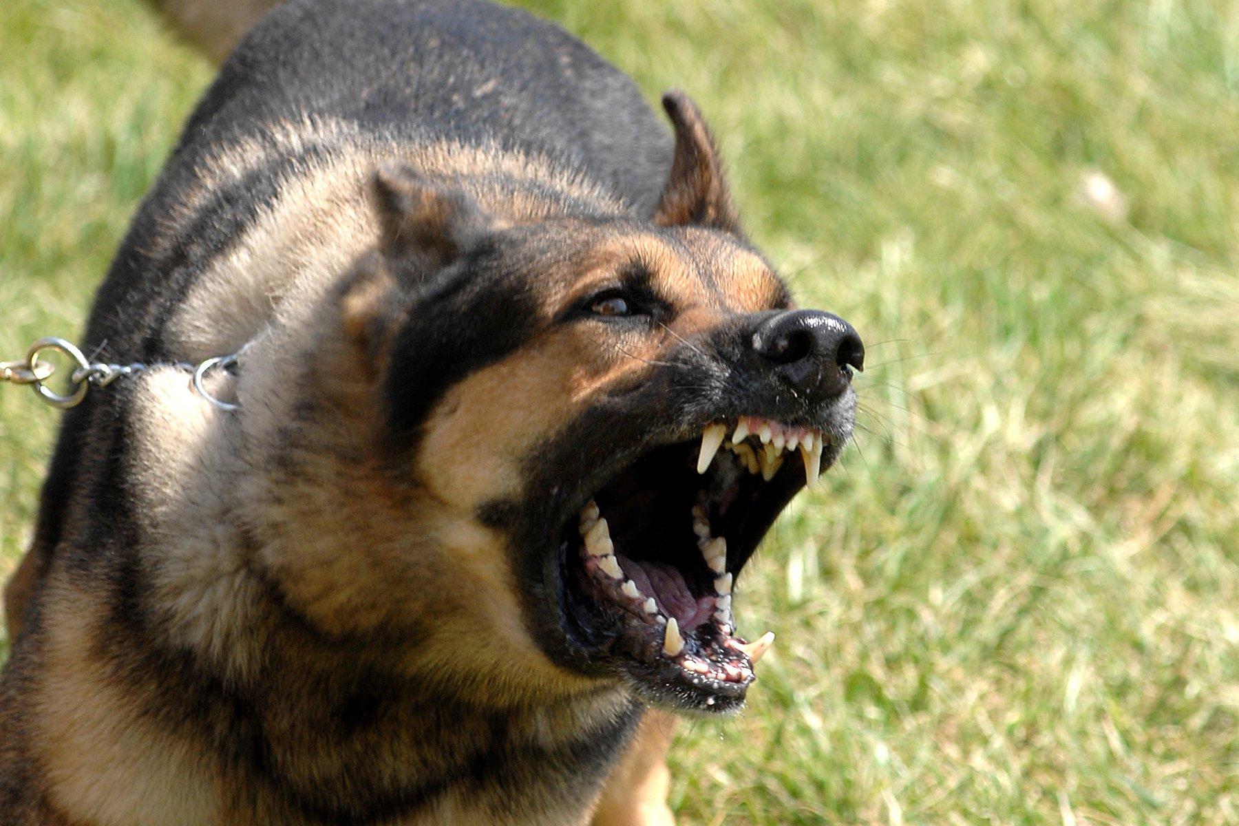 Como acostumar meu cachorro com outras pessoas e animais? Esse é uma pergunta frequente | Foto: Reprodução