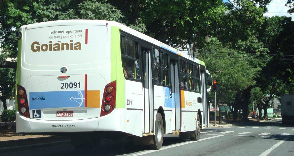 Animais domésticos poderão utilizar o transporte coletivo em Goiás, propõe deputado | Foto: Reprodução