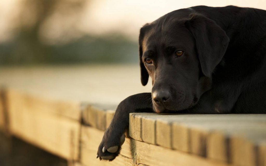 O que fazer quando o cachorro morreu em Goiânia? A comurg tem serviço de recolhimento do corpo | Foto: Reprodução
