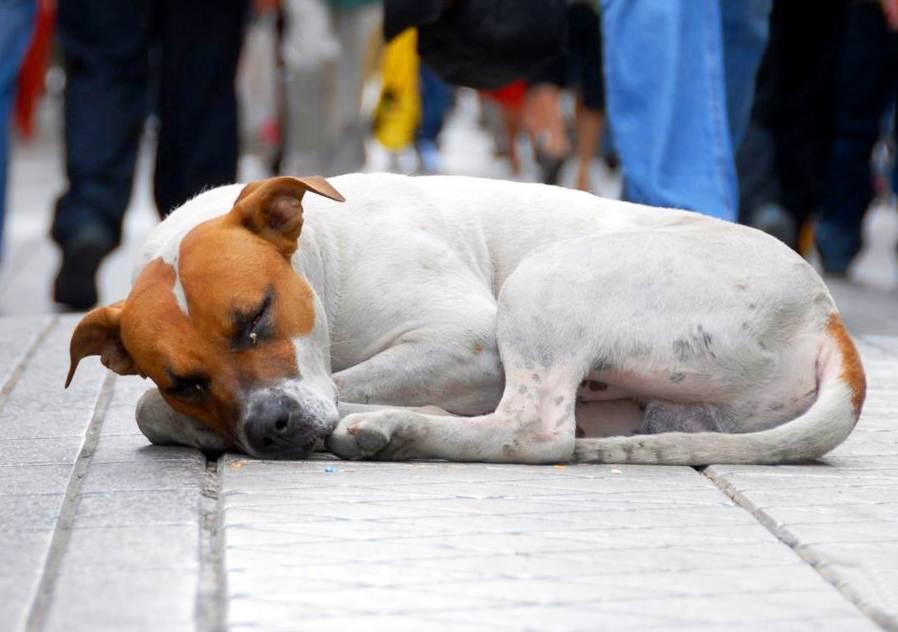 Em Goiânia, sacrifício de cães e gatos abandonados pode ser proibido | Foto: Reprodução