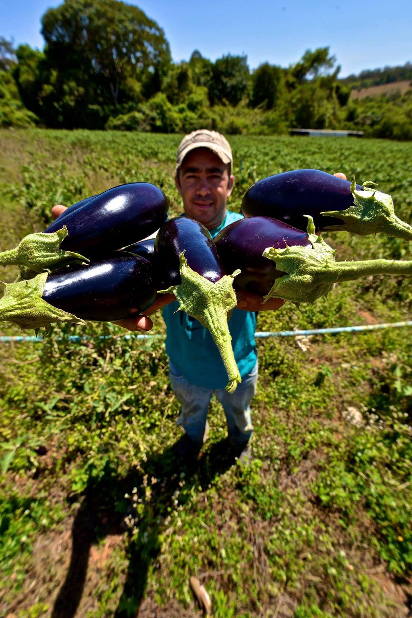 Produtor de hortaliças resume sua história no campo e mostra como o aprimoramento das técnicas de cultivo e plantio pode inspirar diversas outras famílias a expandiram seus negócios | Foto: Ruber Couto