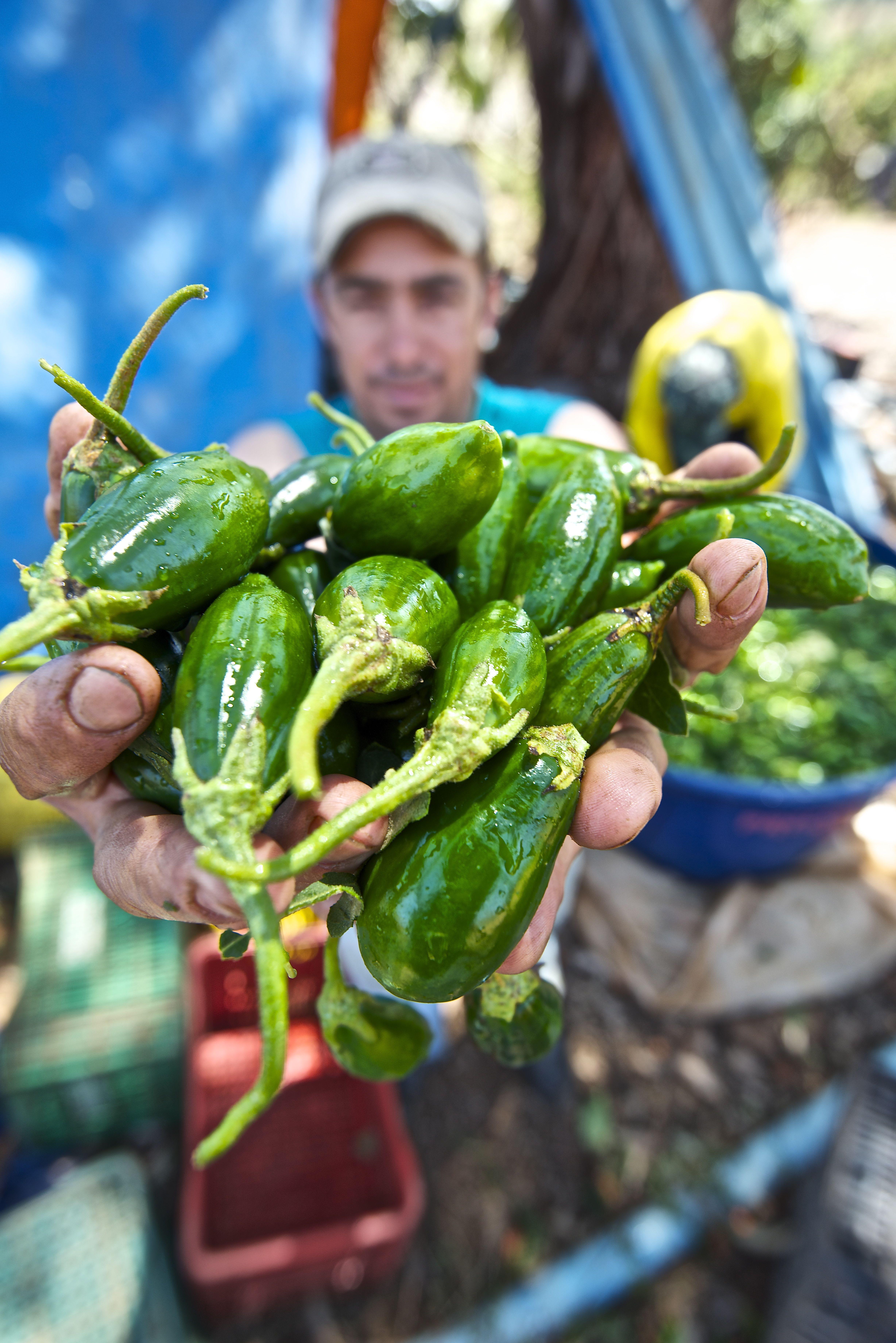 Produção dos micro e pequenos agricultores correspondem à 70% de todo o alimento consumido no País, demonstrando a força máxima da real cadeia produtiva brasileira | Foto: Ruber Couto