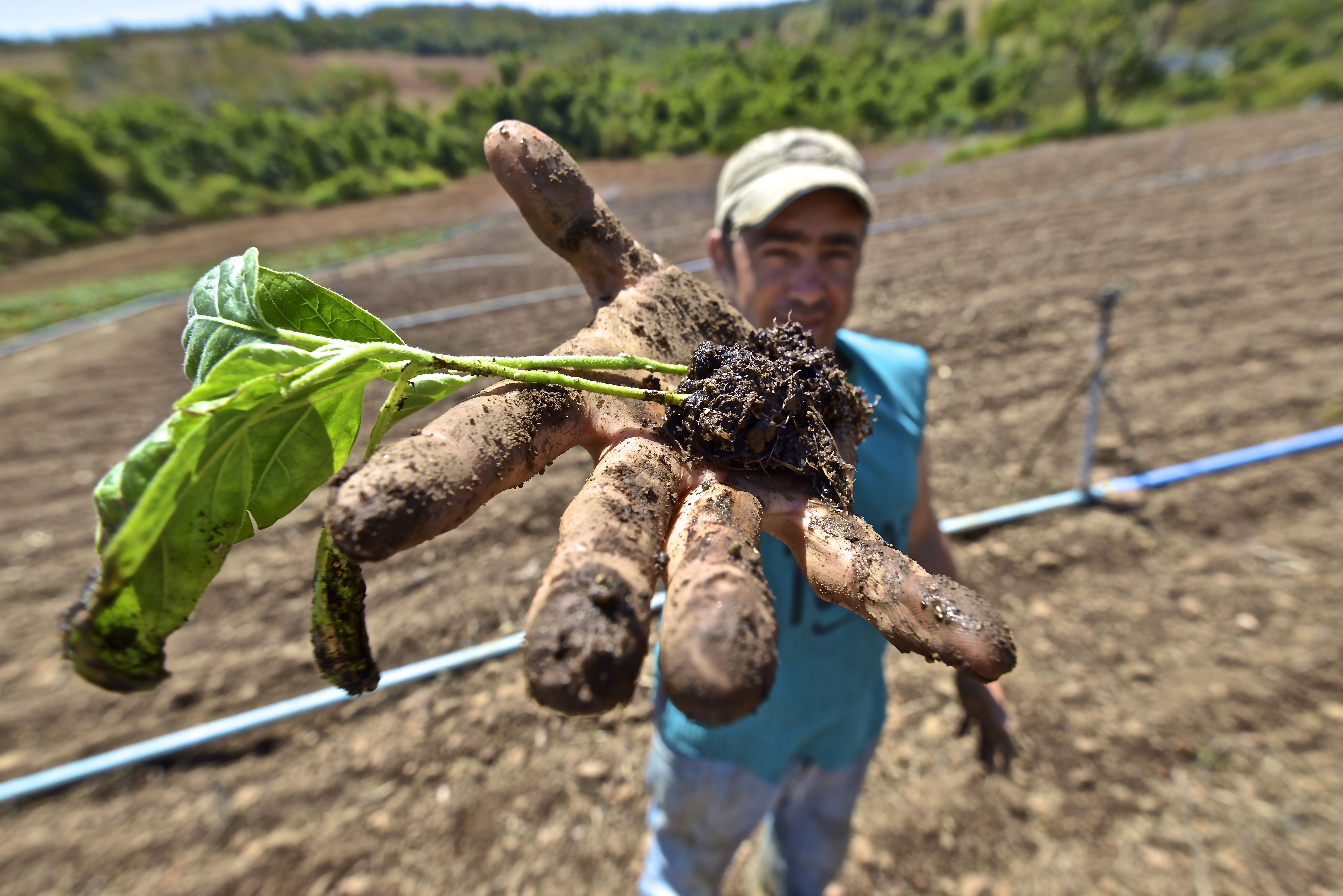 Agricultor goiano herda técnicas de família para o cultivo | Foto: Ruber Couto