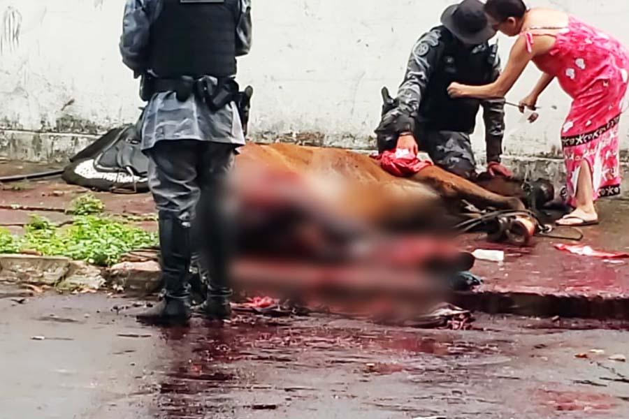 Cavalo atropelado pertencia à Cavalaria da PM-GO | Foto: Leitor/FZ