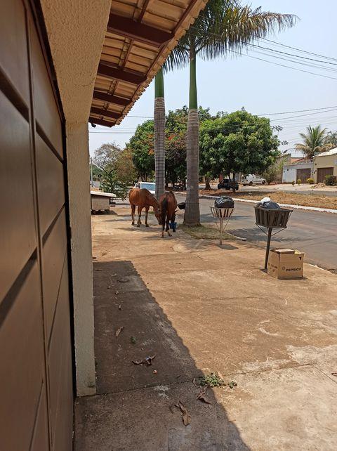 cavalos soltos Parque São Jorge Aparecida