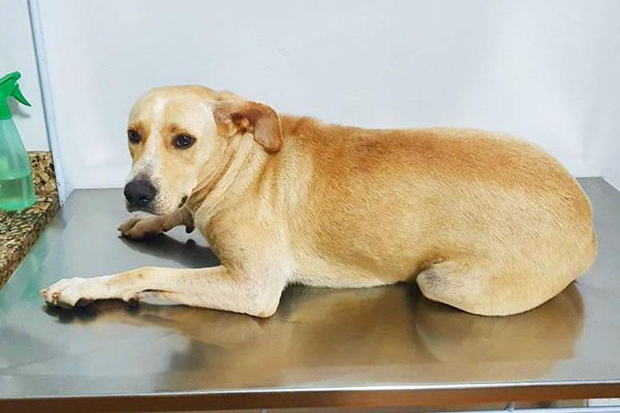PC investiga denúncia de estupro de cadela por candidato em Caldas | Foto: Reprodução