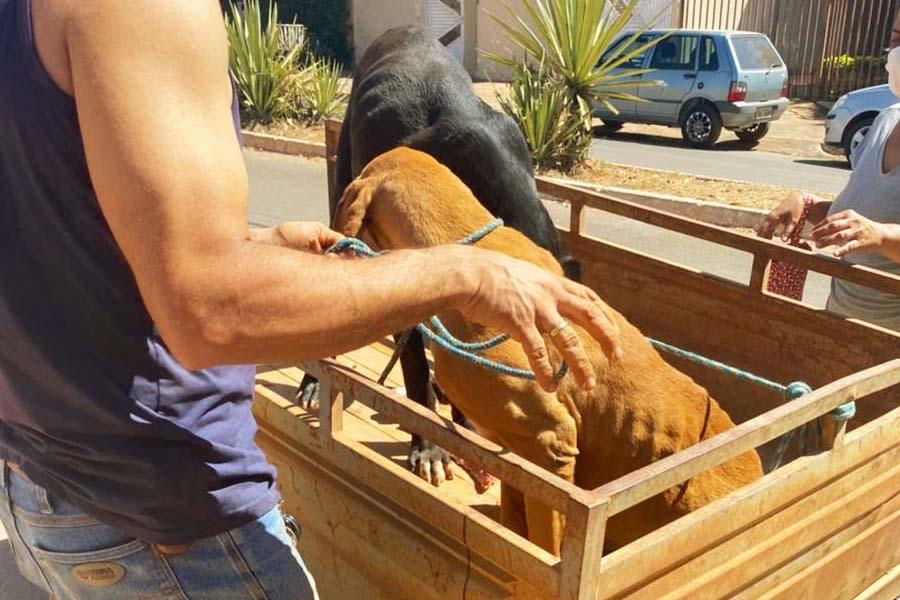 Polícia resgata cães que foram deixados em casa abandonada em Formosa | Foto: Divulgação/ PCGO