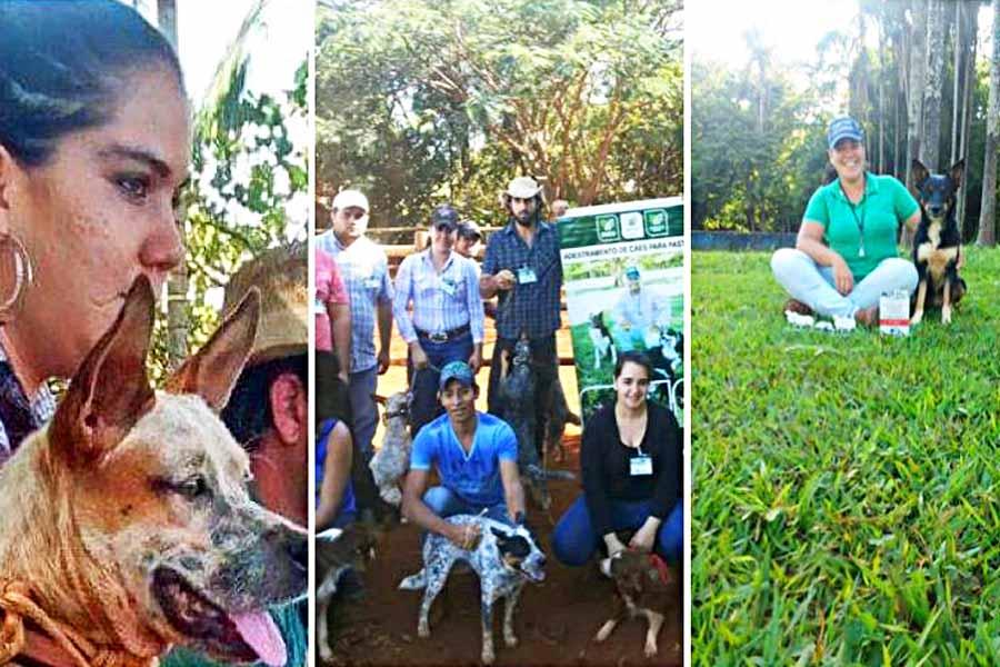 Virgínia Guimarães em três momentos: primeiro dia de formação, em 2014, conclusão do curso e foto atual do trabalho de adestramento de cães de pastoreio | Arquivo Pessoal